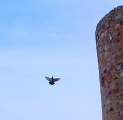 Cuando te puedes posar en lo alto del muro eres Libre.